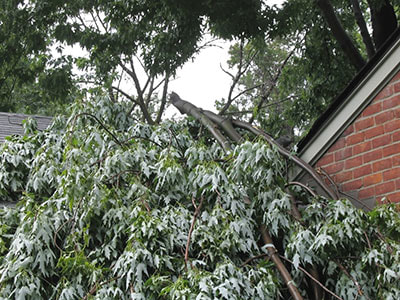 emergency tree service and removal