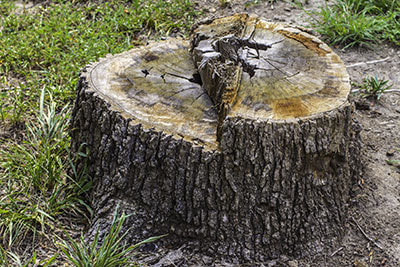 stump grinding and removal